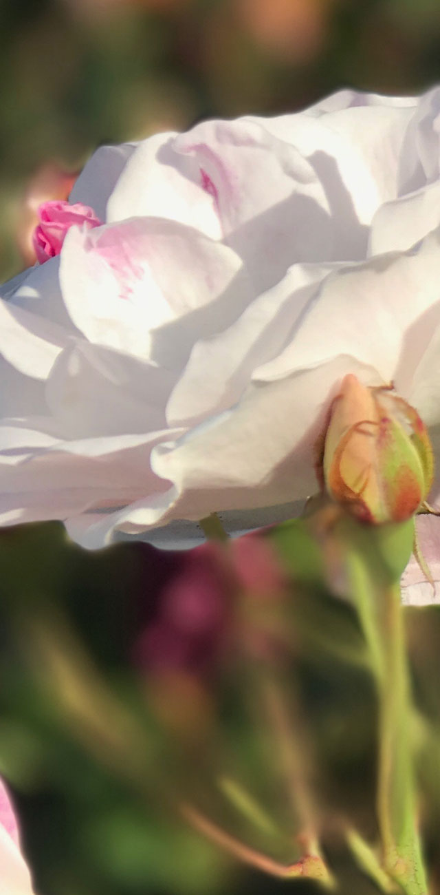 From Renée's garden